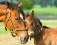 Foal Feeding Guidelines