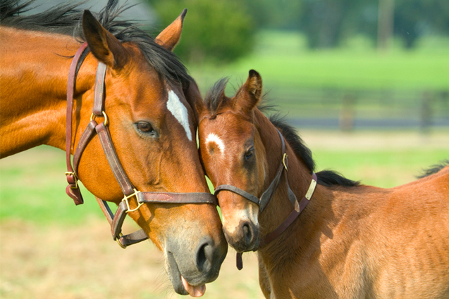 Foal Feeding Guidelines