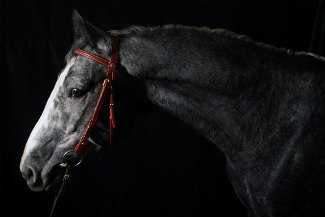 EMERGENCY CARE: Guidelines to Follow During Equine Emergencies