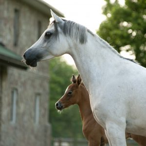 Cremello cross color chart foal color chart.