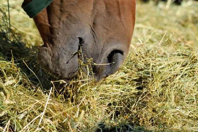 10 Tips for Choosing the Best Hay for Your Horse