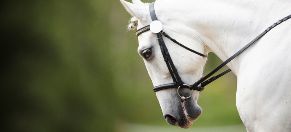 Serving performance and companion horses